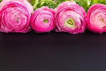Pink ranunculus on a black surface