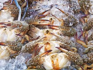 Fresh crab, seafood ingredient