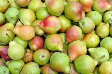 close-up of ripe organic pears