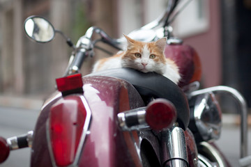 kitten on red retro motor scooter