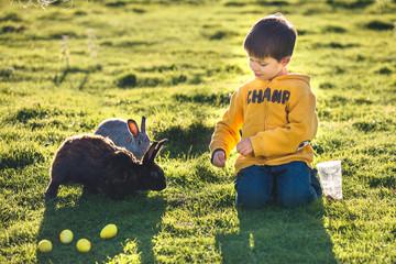 Little boy feeding two rabbits in farm