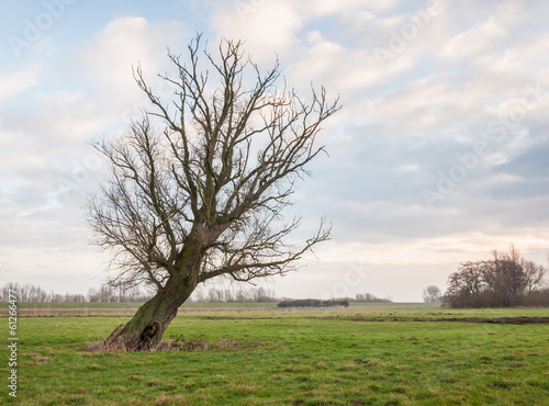 Oblique standing bare tree in the field