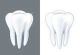 Shiny tooth isolated on white vector