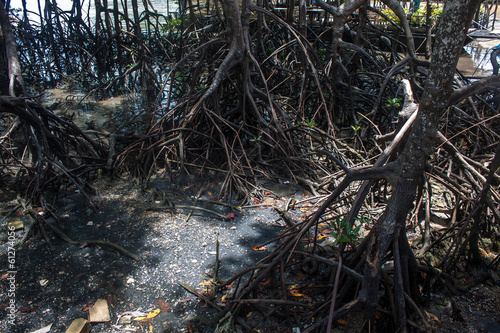 Mangrove roots at Railay, Krabi province, Thailand