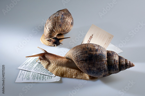 Two grape snails crawling on documents