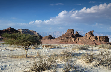 Valley of the geological Timna park, Israel