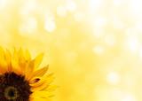 Fototapety Sunflower with ladybird
