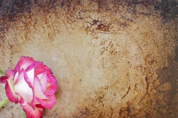 Beautiful rose on a rusty, grunge background
