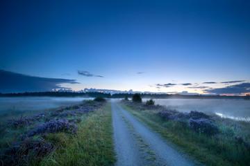 ground road in dusk through swamp