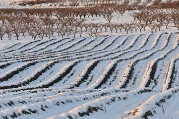 neige en Provence