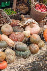 Pumpkin harvest - Stock Image