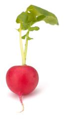 Fresh garden radish isolated on white background cutout