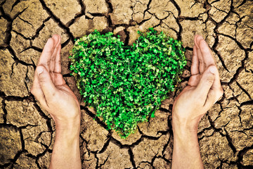 hands holdin a tree arranged as a heart shape on cracked earth