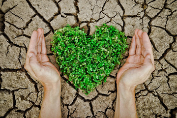 hands holding heart shaped tree on cracked earth