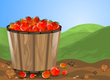 Tomatoes in bucket,farm and nature background