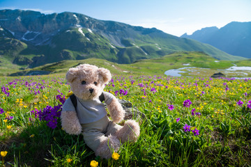 teddy bear hiking