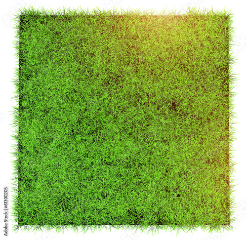 grass in field