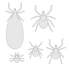 cartoon image of ticks set