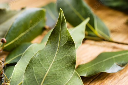 Bay leaf macro. Organic food