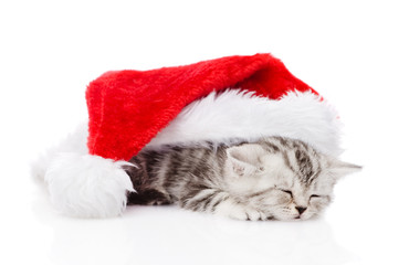 sleeping scottish kitten with santa hat. isolated on white