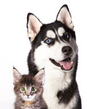Cat and dog - 61306661