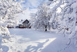 Winter fairytale, heavy snowfall covered the trees and houses in