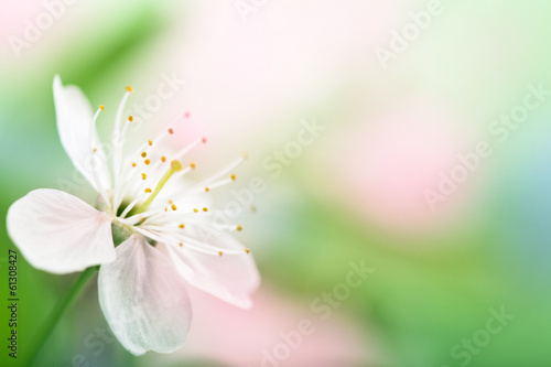 spring flower over blurred background