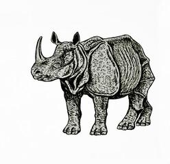 disegno di rinoceronte indiano