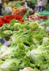 Organic green lettuce (Lactuca sativa)