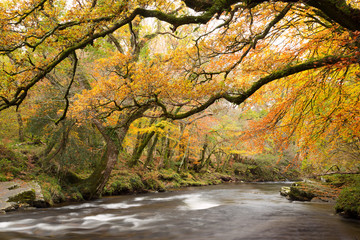 River Dart in autumn Dartmoor Devon Uk