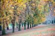 Herbstfarben an den Parkbäumen