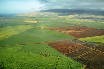 Aerial views of sugarcane crops in Maui