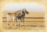 Two zebras on paper texture for African safari in retro style