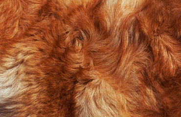 Macro Wool bright-red dog