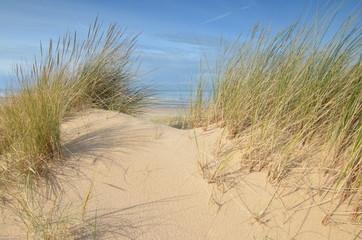 des oyats sur la plage