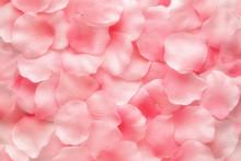 Schöne zarte rosa Rosenblättern