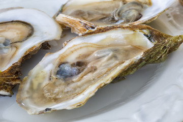 Malpaque Oysters