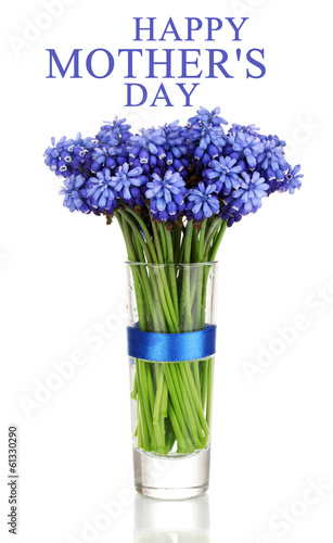 Muscari - hyacinth in glass isolated on white
