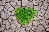 heart shaped tree on cracked earth