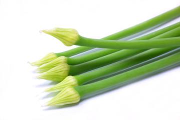 Fresh green Allium Spring Onion Flowers