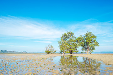mangrove trees in phuket thailand sea