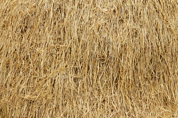 Dried reed