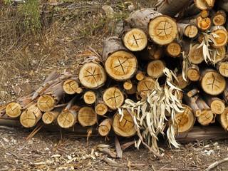 Logs of eucalyptus trees, eucalyptus lumbering