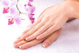 Fototapety french manicure with pink orchid on the white