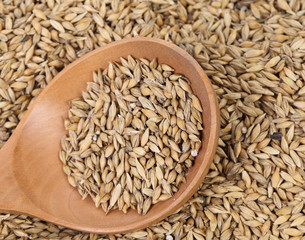 Closeup of wheat grains with wood spoon.