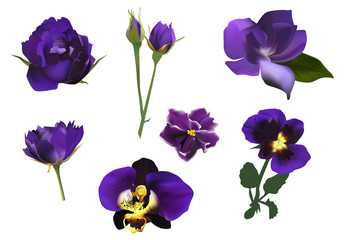 set of seven dark blue flowers isolated on white