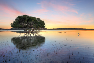 Sunrise Mangrove Tree and White Egret