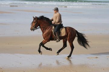 Spanischer Reiter mit braunem Hengst am Strand