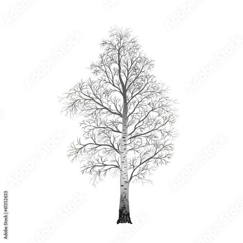 картинки деревь