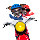 motorbike couple of dogs
